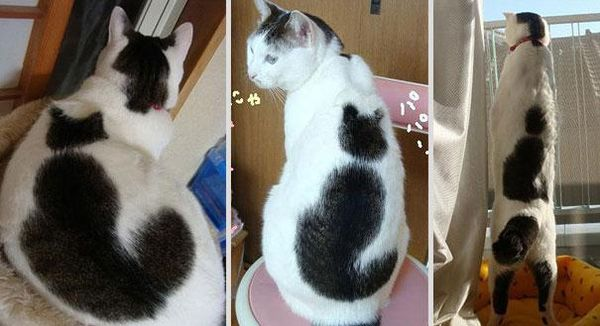 cat-markings-4-2_resultat